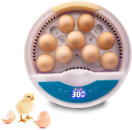 Une couveuse automatique 12 œufs